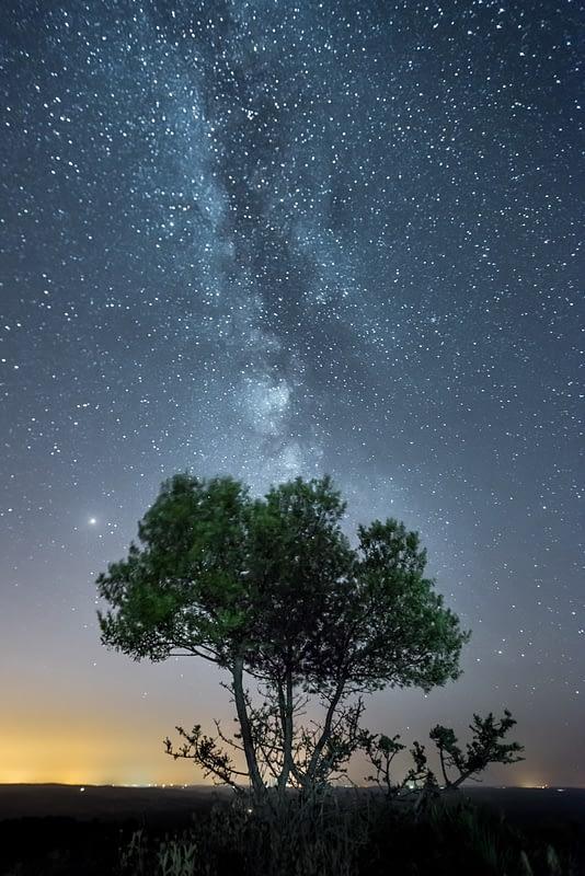 Árbol con Vía Láctea