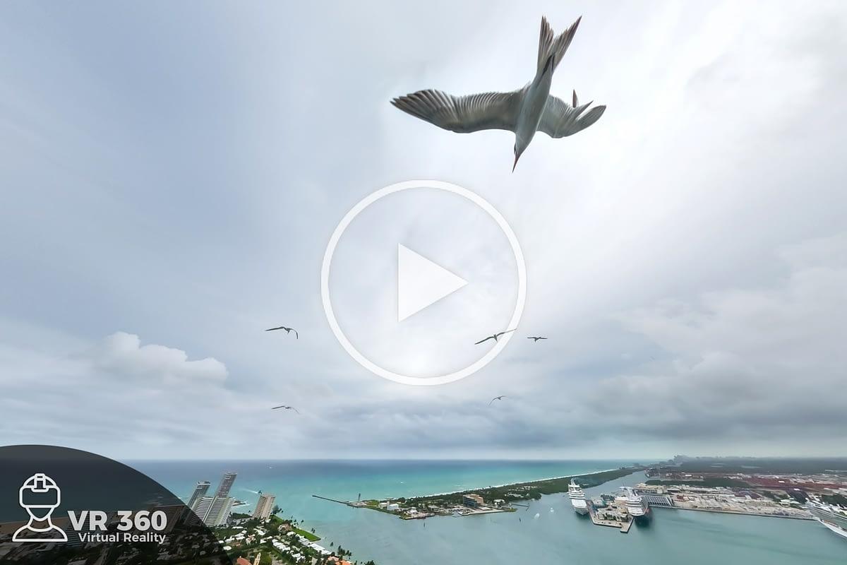 Debajo de una gaviota en vuelo
