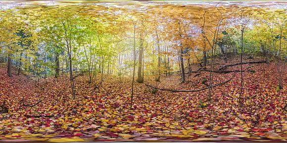 Fotografía 360 en formato equirectangular de un parque en Otoño en Canadá